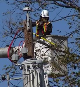 Contractors for Oncor trimming trees